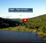 Nuovo video dal progetto AForClimate