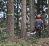 "Disponibile il video del webinar ""Cantieri forestali e Covid-19"""