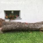Vendo un tronco di noce nazionale