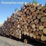 Vendita di legname da schianti a catasta