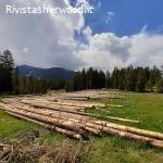 Vendita pubblica di legname - Asuc di Fisto
