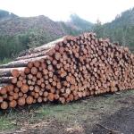 Vendita pubblica di legname – Comune di Cavalese