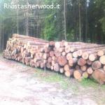 Vendita pubblica di legname - Comune di Fisto