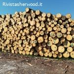 Vendita pubblica di legname - Comune di Levico Terme