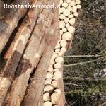 Vendita pubblica di legname - Comune di Livo e Asuc Mocenigo