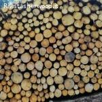 Vendita pubblica di legname - Comune di Tesero