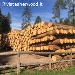 Vendita pubblica di legname - Comune di Ziano di Fiemme
